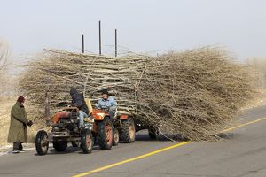 Chinese farmers haul a huge wide load of wood using a tiny tractor in Heilongjiang province