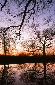 Trees reflected in a pond in Lancashire UK at sunset